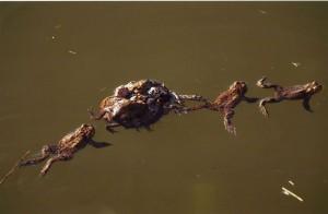 Toads J Marshall