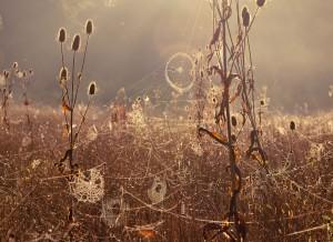 Jelly Webs S Davies