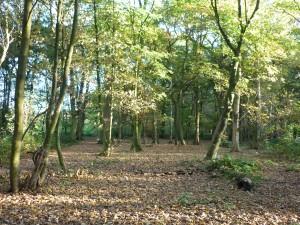 Woodland A Atkinson