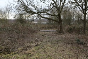 Brambles cleared by volunteers